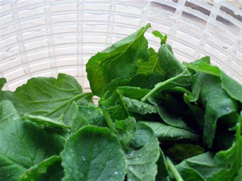 cuisiner les feuilles de radis cuisiner les feuilles des l 233 gumes