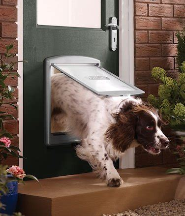 porte automatique pour chien chien pour porte chien bonheur