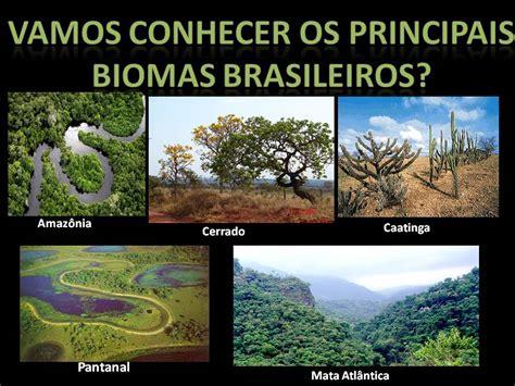 Lu 3 Mata ced 03 ambiental biomas brasileiros