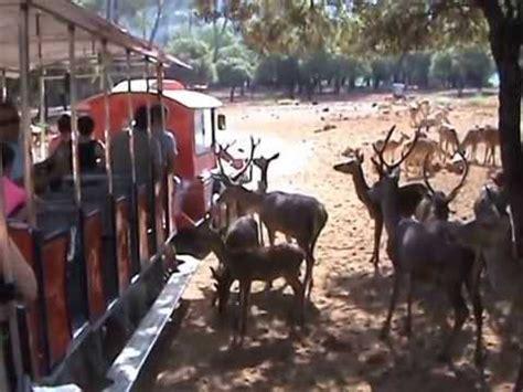 visita al parque cinegetico en la sierra de cazorla segura  las villas youtube