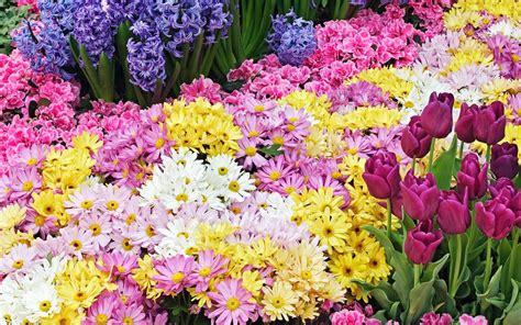 Garden Of Rosa E Tr 228 Dg 229 Rd Blommor Bakgrund Android Appar P 229 Play