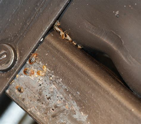 bed bug hiding places how to inspect a box spring for bed bugs
