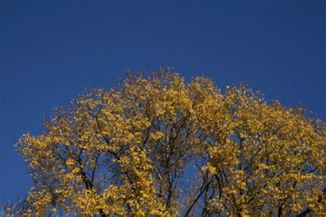 fiori di bach elm fiori di bach elm pollicegreen