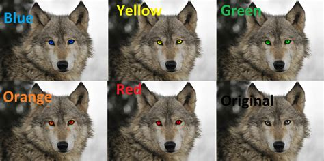 what color are wolves different colored wolves images