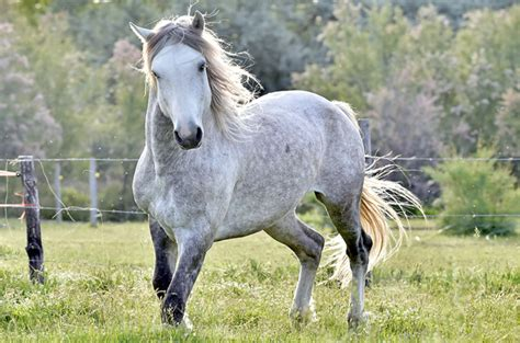 pictures of mustang horses mustang images
