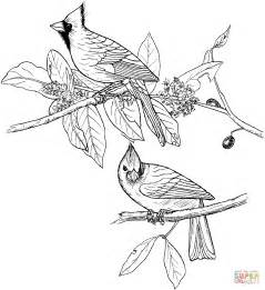 what color are cardinals cardinals coloring page free printable coloring pages