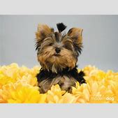 Puppies! Free M...