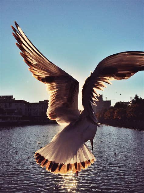 birdman zcool