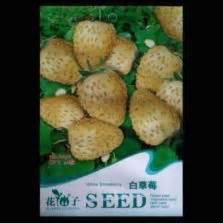 Jual Bibit Strawberry Putih jual bibit buah benih bibitbunga
