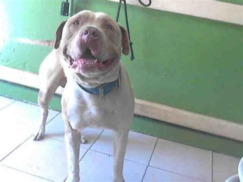 Gardena Ca Pound 1000 Images About Adopt Me On