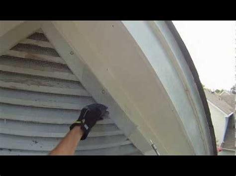 Bat Trap One Way Door by Raccoon Is Evicted From Attic Using One Way Door Doovi