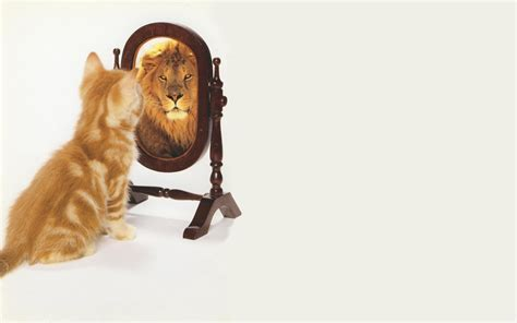 Cat Mirror wallpaper cat mirror hd wallpapers