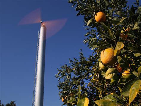 california citrus growers  wind  fight frost breitbart