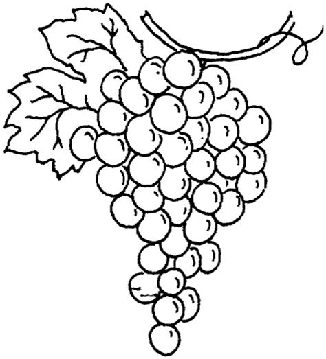 coloring page of grapes outline of grapes clipart best