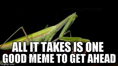 Mantis Meme - never give up anyone can make the front page at anytime