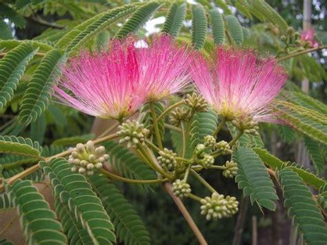 Bella Piante Da Giardino Con Fiori Profumati #1: alberi-da-fiore_NG3.jpg