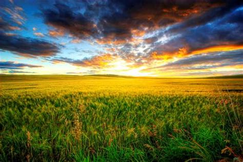 prairie facts 10 interesting prairie facts my interesting facts