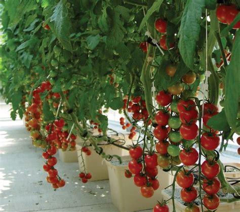 grow     grow   hydroponic