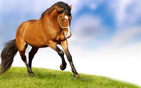 wallpaper horse free download red horse wallpaper widescreen hd free download