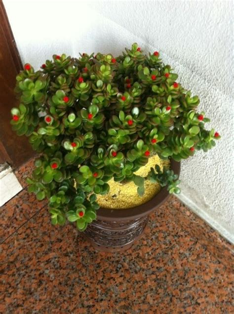 wohnideen pflanzen feng shui pflanzen f 252 r harmonie und positive energie im