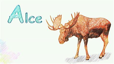 imagenes de animales que empiezen con la letra d aprendiendo el nombre de los animales animales con a