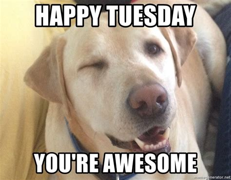 happy tuesday meme happy tuesday you re awesome who me puppy meme generator