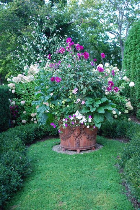 Nicotiana Mutabilis Giant Dahlias Large Erra Cotta Large Container Gardening Ideas