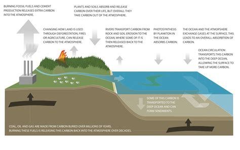 carbon sink carbon cycle diagram niwa