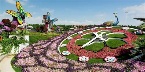 dubais miracle garden   real life alice  wonderland