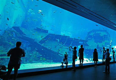 5 best aquariums in the world that you to sea buro 24 7