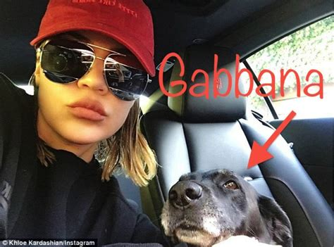 what happened to kim kardashian s dog rocky what happened to 29 pets seen on keeping up with the