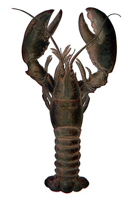 the lobster file lobster nsrw jpg