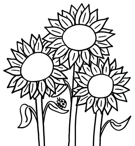 printable sunflower az coloring pages