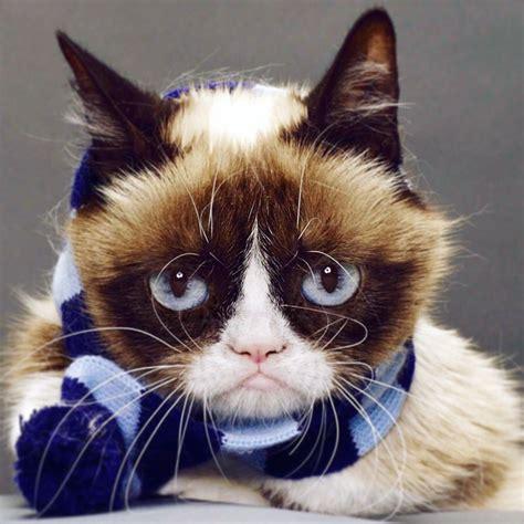 1452138923 how to be a cat grumpy cat realgrumpycat twitter