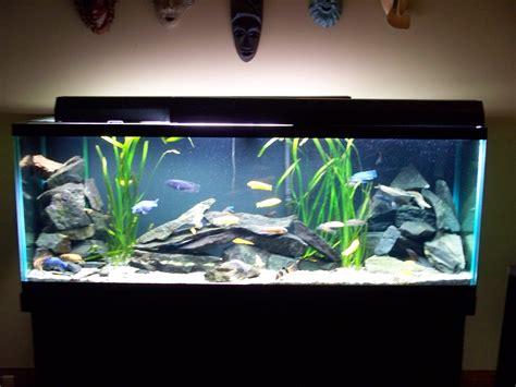 aquarium design for cichlids cichlids com 150 gallon african cichlid tank