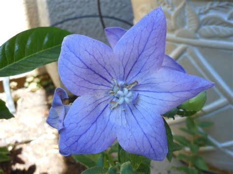 1000 images about flowers that come back every year on pinterest perennials flower and