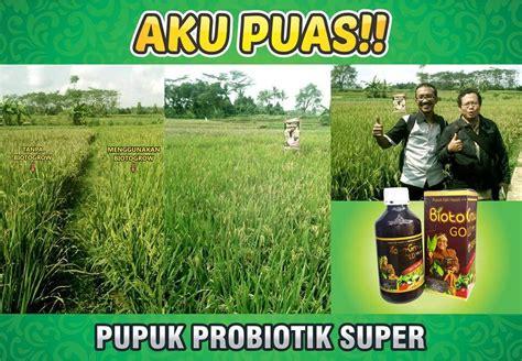 Pupuk Cair Hayati Biotogrow biotogrow pupuk hayati alami tanaman padi saya lebih