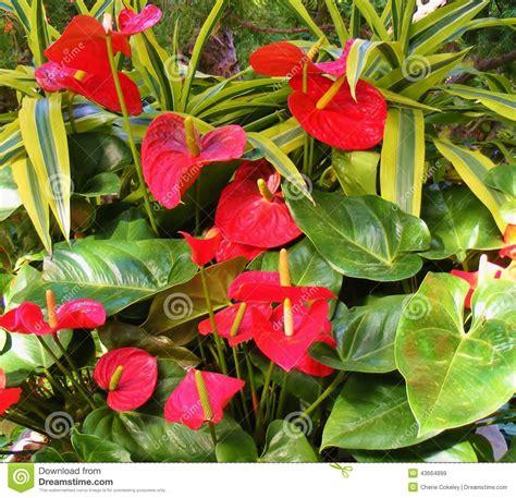 imagenes verdes y rojas flores rojas grandes tropicales al lado de las hojas de