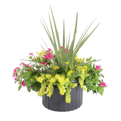 Click And Grow Refills Shop Ready Refill 2 88 Gallon Mixed Annuals Combinations