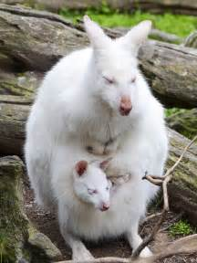 shot pictures albino oddly white animals national geographic society blogs