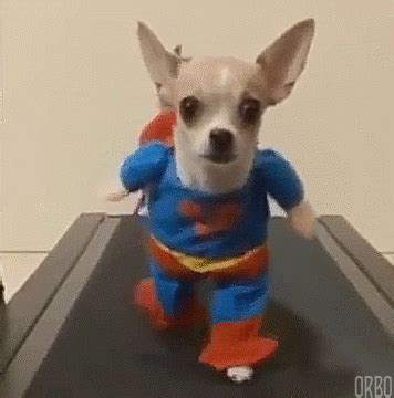 puppy animated gif animated gifs at best animations