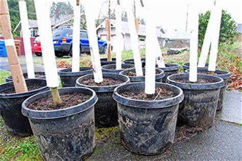 Garden Sphere Tacoma by Tree Coupon Program City Of Tacoma