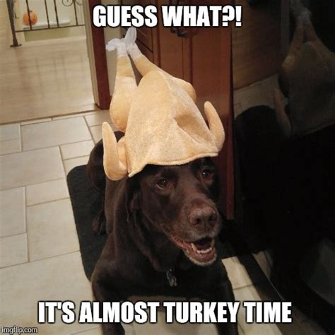 Funny Turkey Memes - almost turkey time imgflip