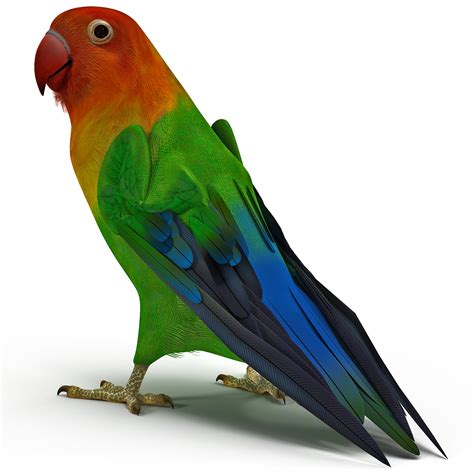 For Lovebird 3d lovebird rigged model