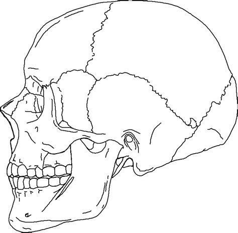 anatomy coloring pages skull human skull coloring coloring pages