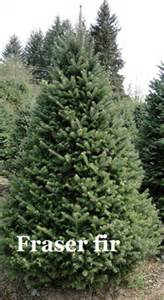 Noble fir vs douglas fir hunter christmas trees llc