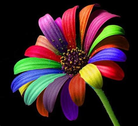 most beautiful colors holi colors 30 the most beautiful rainbow wallpapers