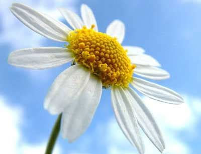 canula fiore accorciare i tempi di ripristino dell alimentazione orale