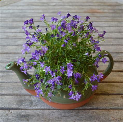 Large Teapot Planter by Planters Green Glazed Large Teapot Planter