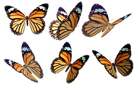 butterfly pattern png butterflies 4 png stock by roy3d on deviantart